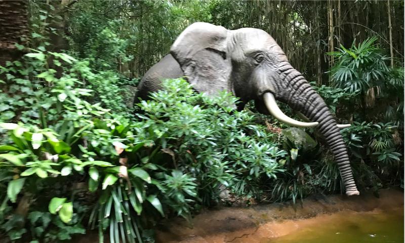 ジャングルクルーズから見た象の画像